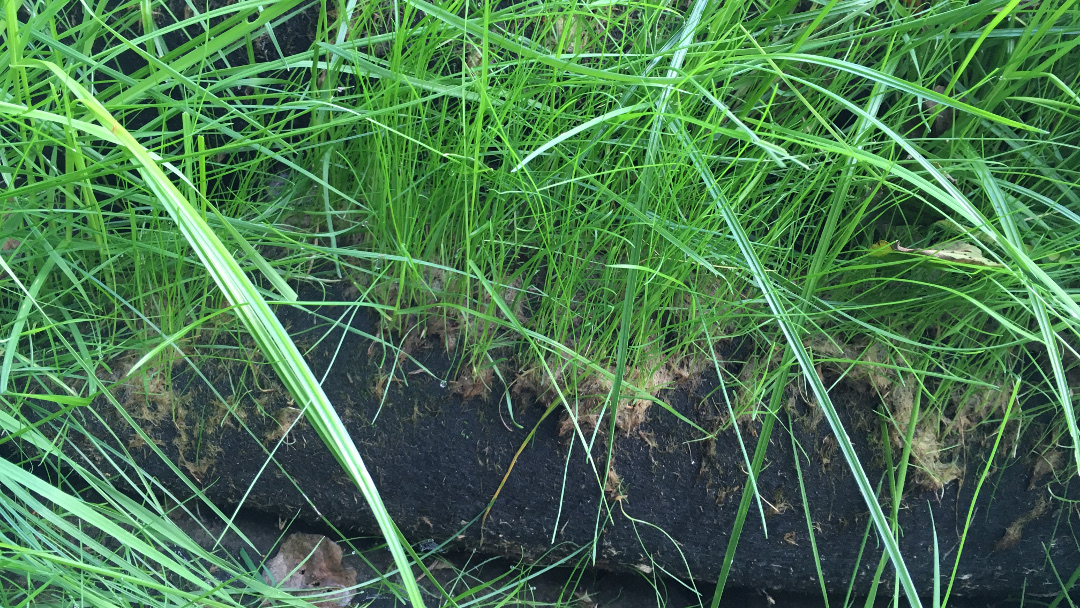 Why Use The Rootlok Vegetated Wall System Vs Hard